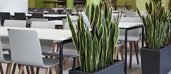 Kuvassa on pöytiä, tuoleja ja huonekasveja.
